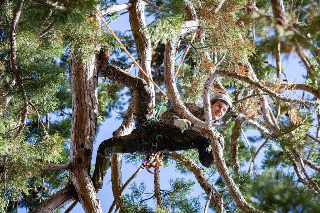 Mammutbaum Kletterer Timmy