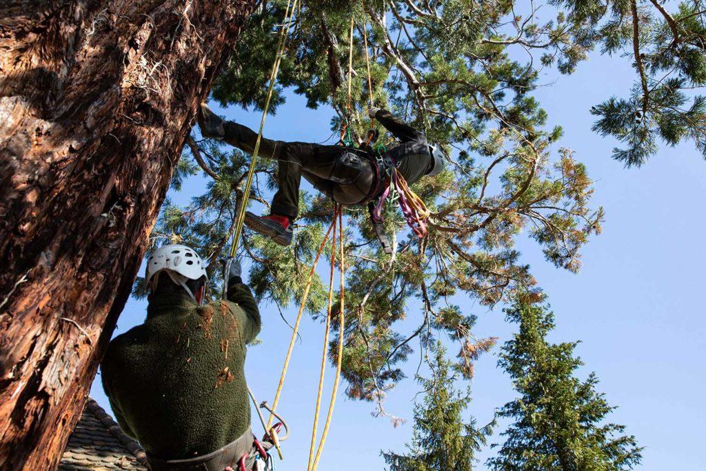Aufstieg auf den Mammutbaum, Fotoreportage