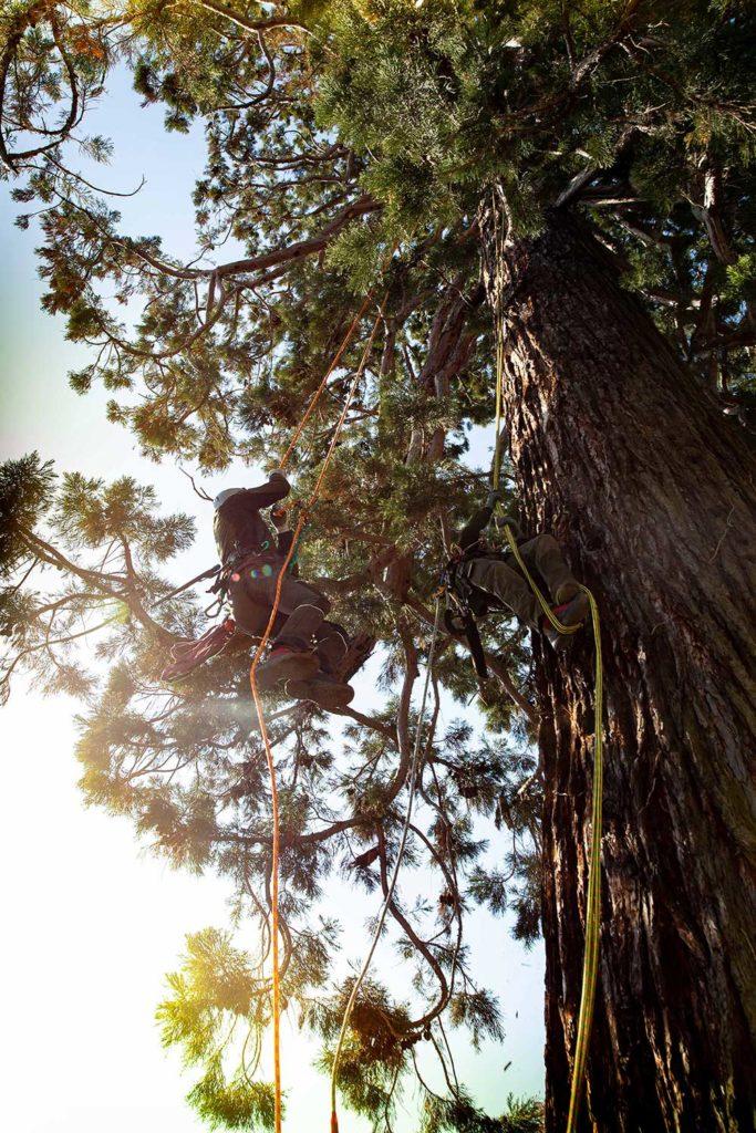 Mein Freund der Baum..., Baumkletterer