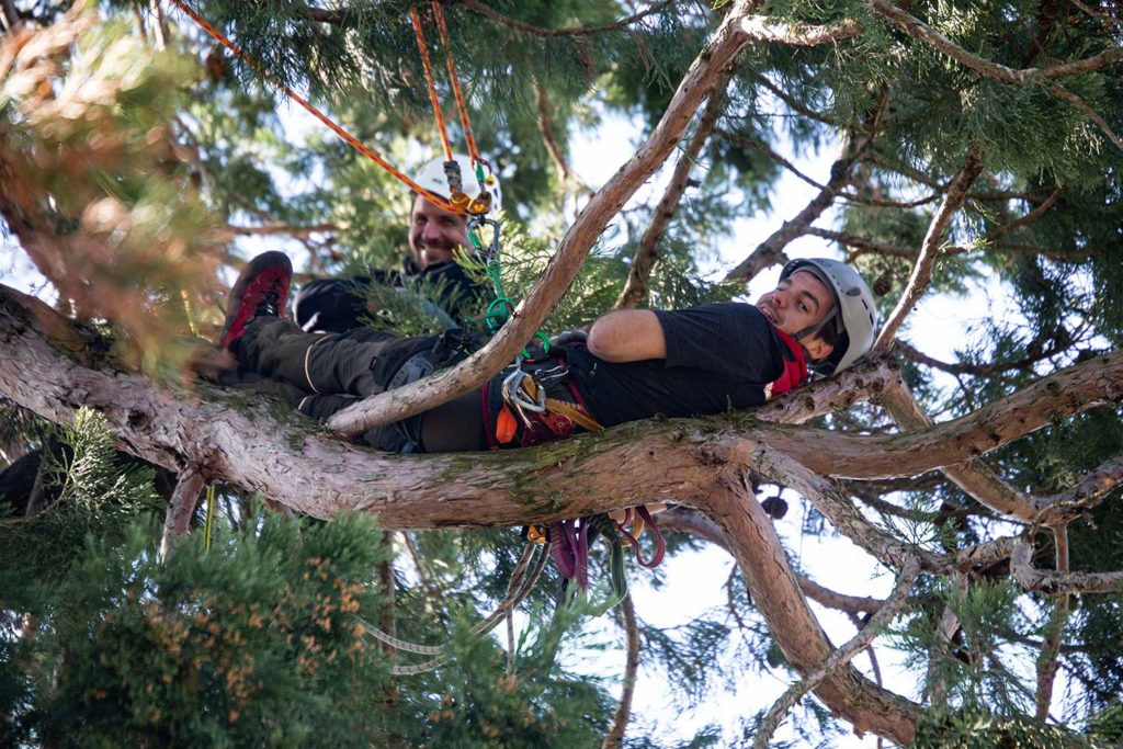 Ruhepause während Baumpflege