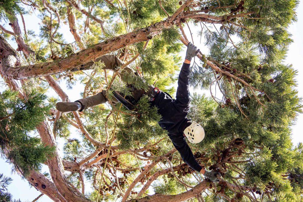 Tarzan im Mammutbaum, Fotoreportage