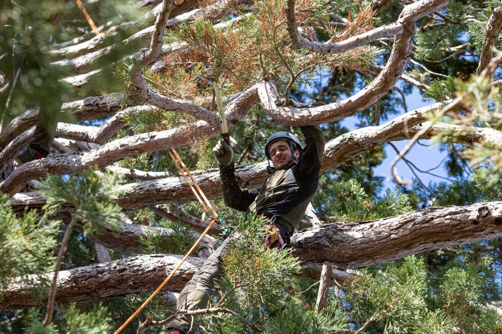 Baumpfleger Timmy, Fotoreportage