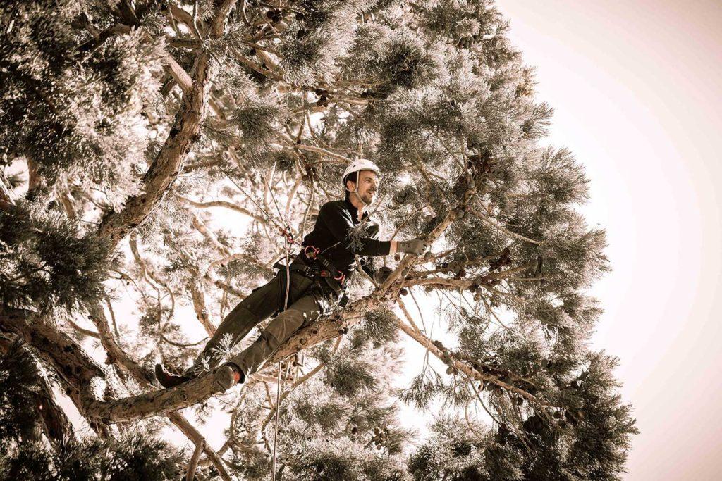 Baumpflege Mammutbaum in Kilchberg