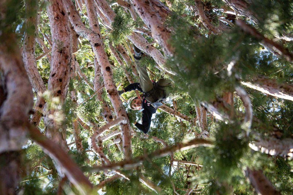 Mammutbaum Fotoreportage