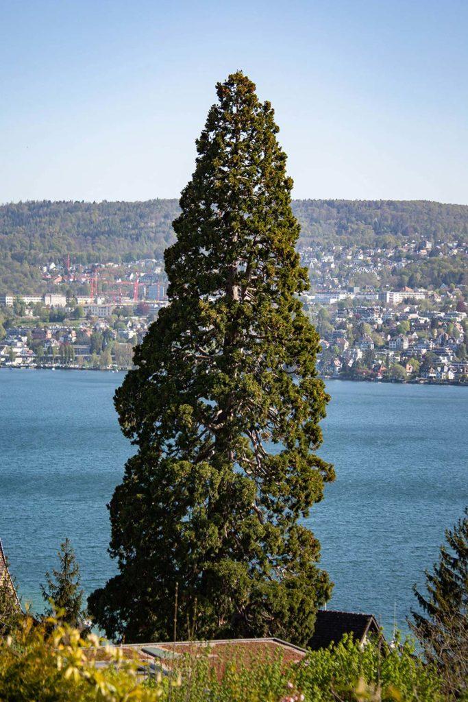 Baumspezialisten Fotograf Zürich