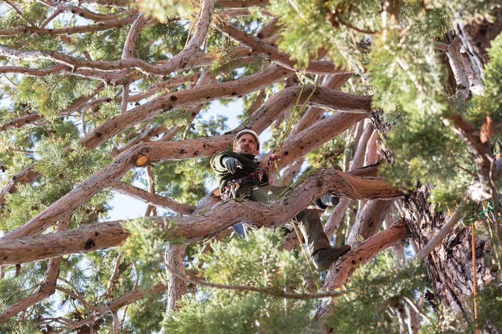 Manu im Mammutbaum in Kilchberg Zürich