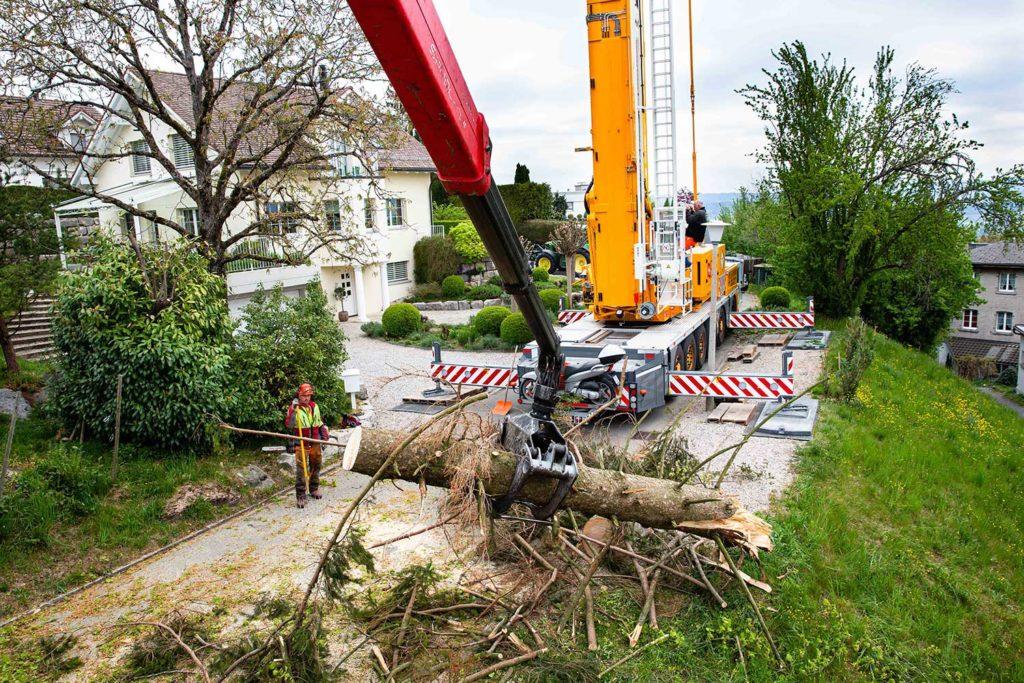 Aufräumarbeiten Baum wird aufgeladen