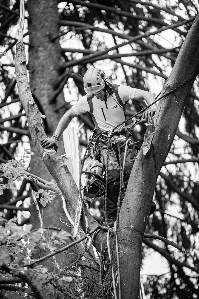 Baum Fällen Fotoreportage