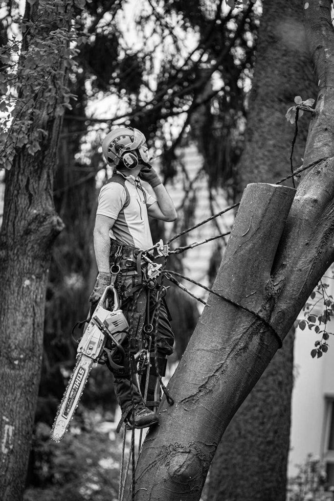 Experte im Baum