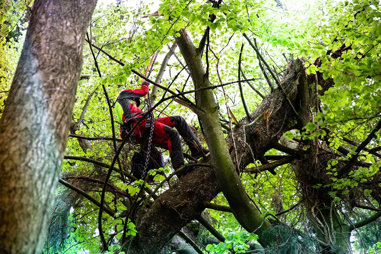 Lumberjack Fotoreportage